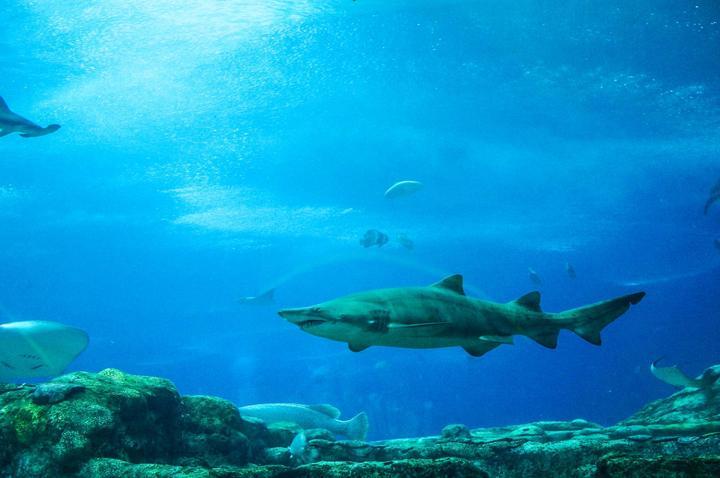 【我要去日本长野】夏天里的一场亲子海底探