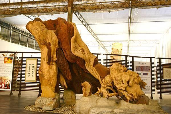 """这家博物馆还真是奇葩""""古木成精""""""""木化石"""""""