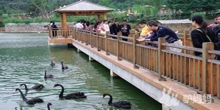 鼋头渚+动物园