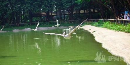 长隆欢乐世界,香江野生动物园,鳄鱼公园开园时间平日09:00-18:00,周末