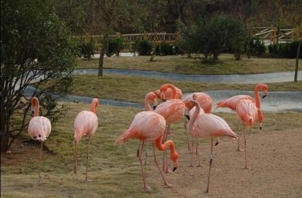 山东青岛森林野生动物世界-驴妈妈门票预订