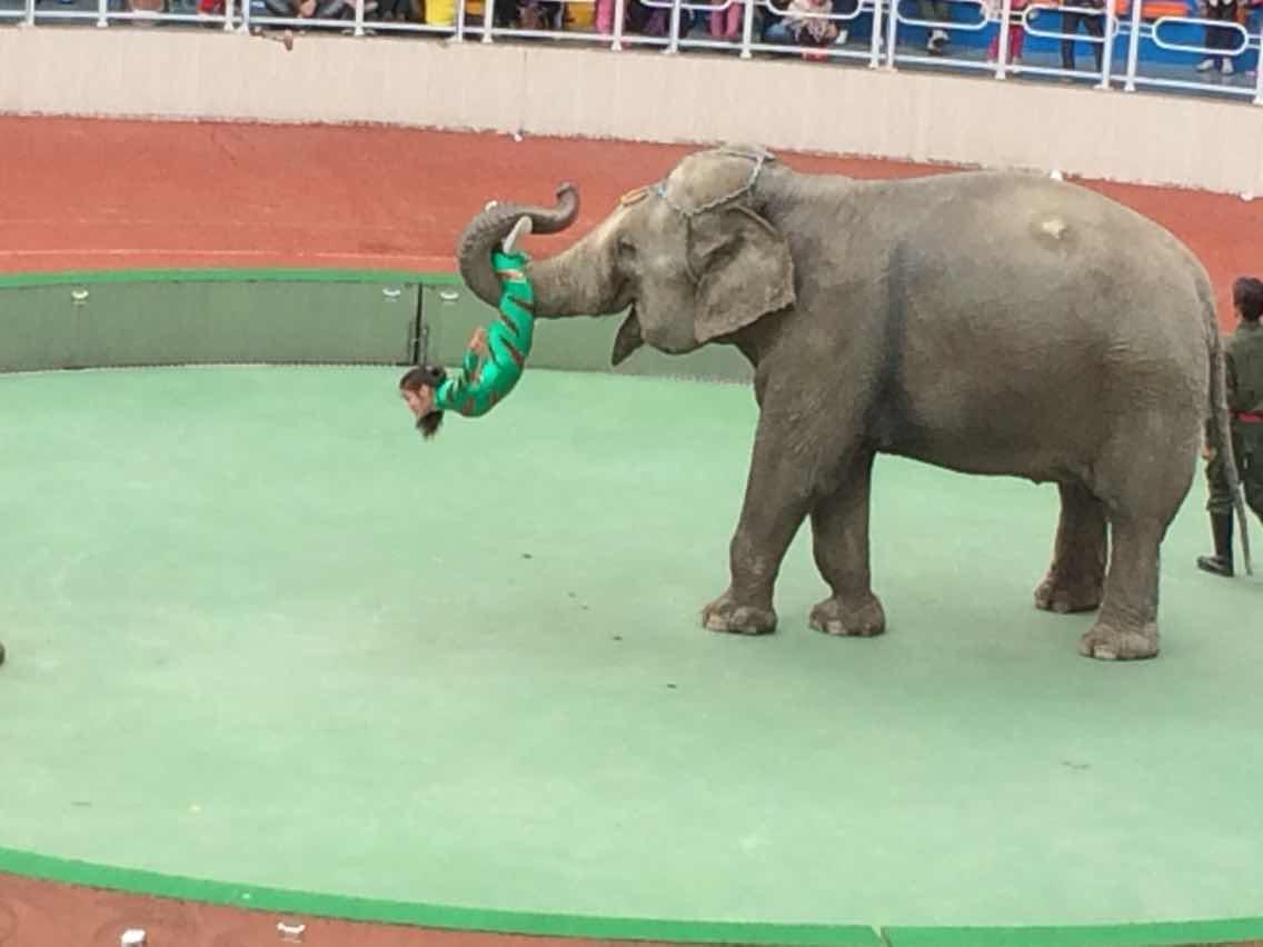 上海野生动物园上海野生动物园现在里面好多动物可以喂,带孩子 驴妈图片