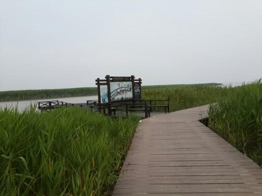 崇明二日游--紫海鹭缘熏衣草,东平国家森林公园 600x450 - 83kb图片