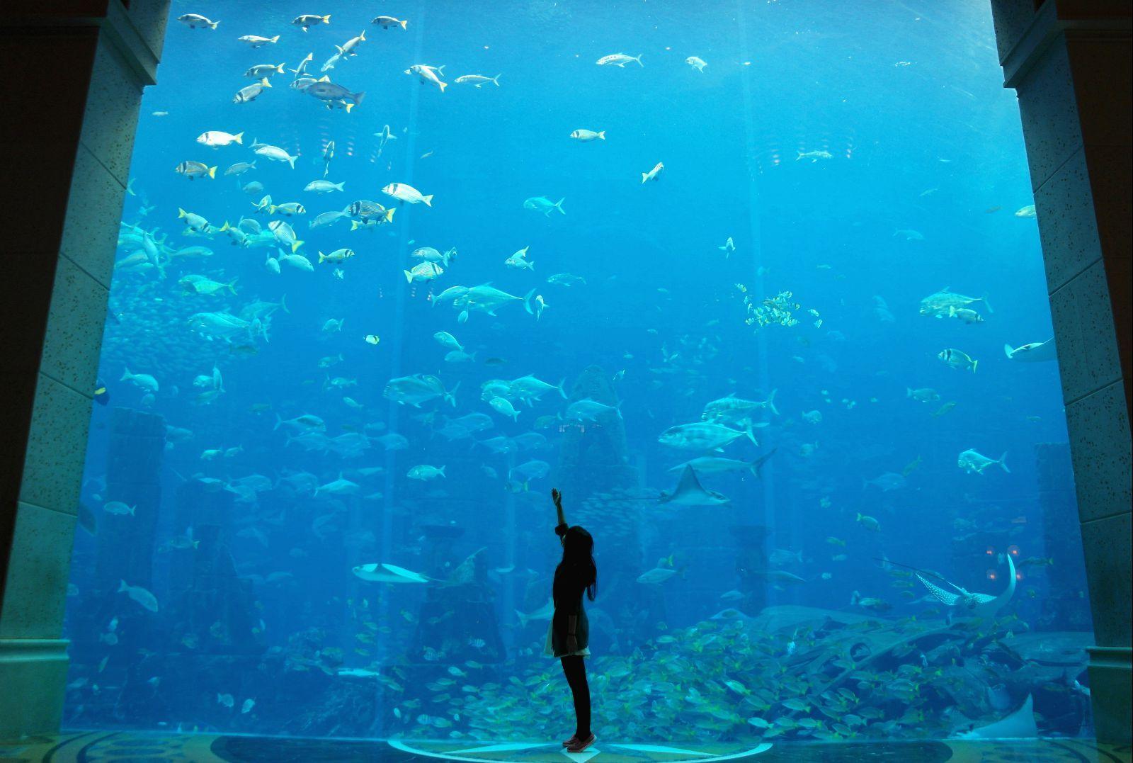 迪拜,沙迦经典一日游(朱美拉海滨浴场 棕榈岛 亚特兰蒂斯水族馆 迪拜图片