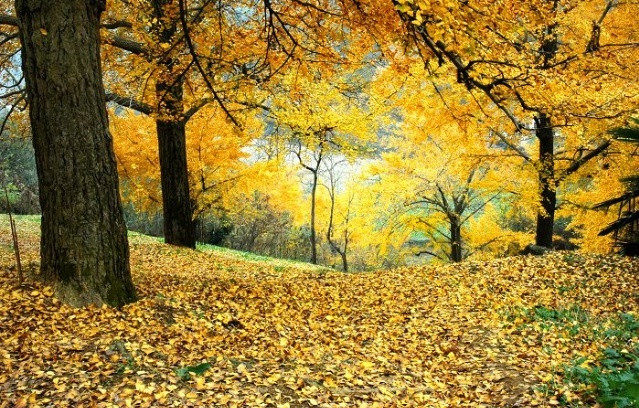 壁纸 风景 森林 桌面 639_408图片
