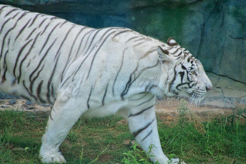 园区内生活着来自各地的珍惜野生动物100余种,共计兽类40余种,