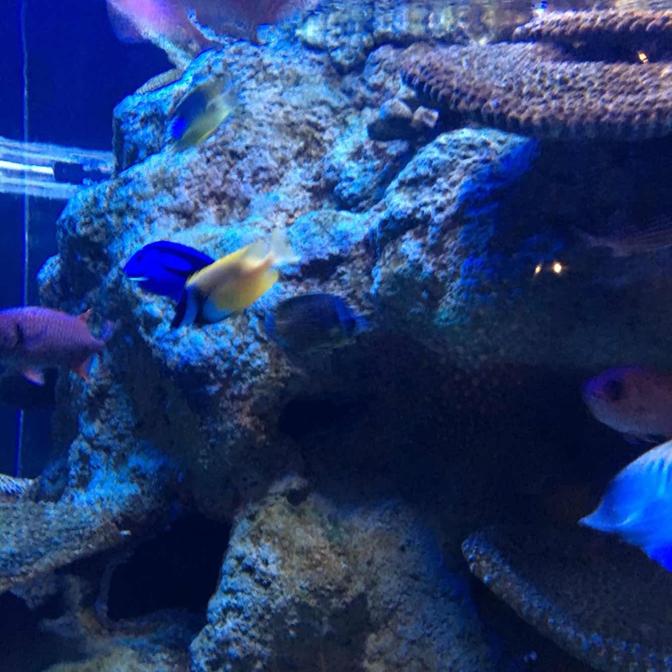 北海海底世界好玩_富国海底世界VS北京海洋馆,请问哪个更好玩一点? 问