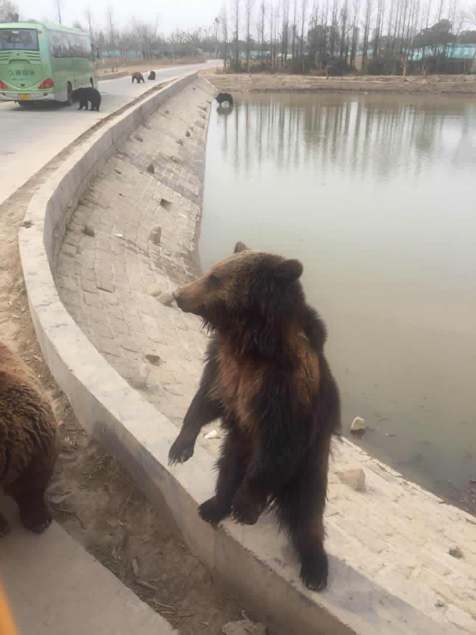 上海野生动物园+成人票上海野生动物园今天去了上海