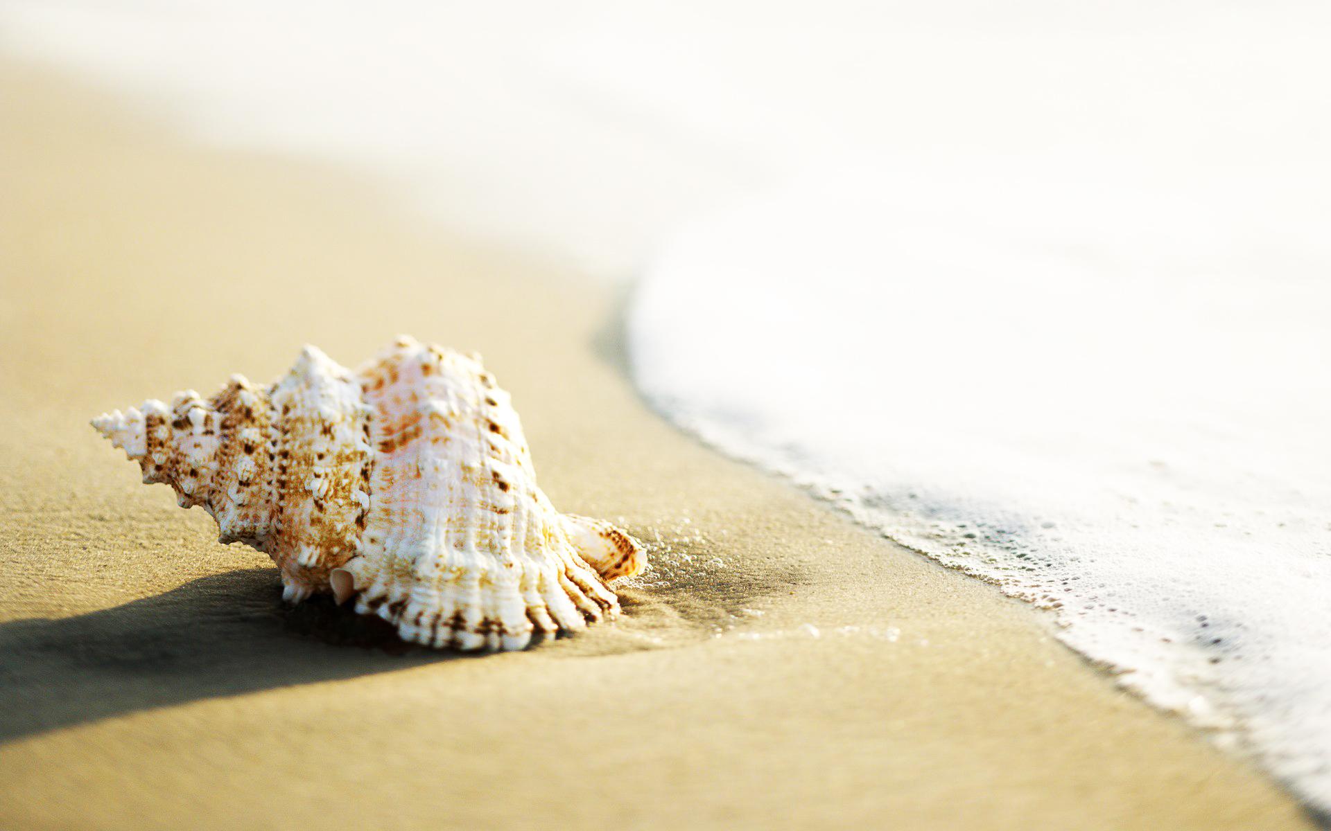 青岛 大乳山 威海 烟台 蓬莱巴士4日跟团游 0购物,享特色美食,赠送海洋世界
