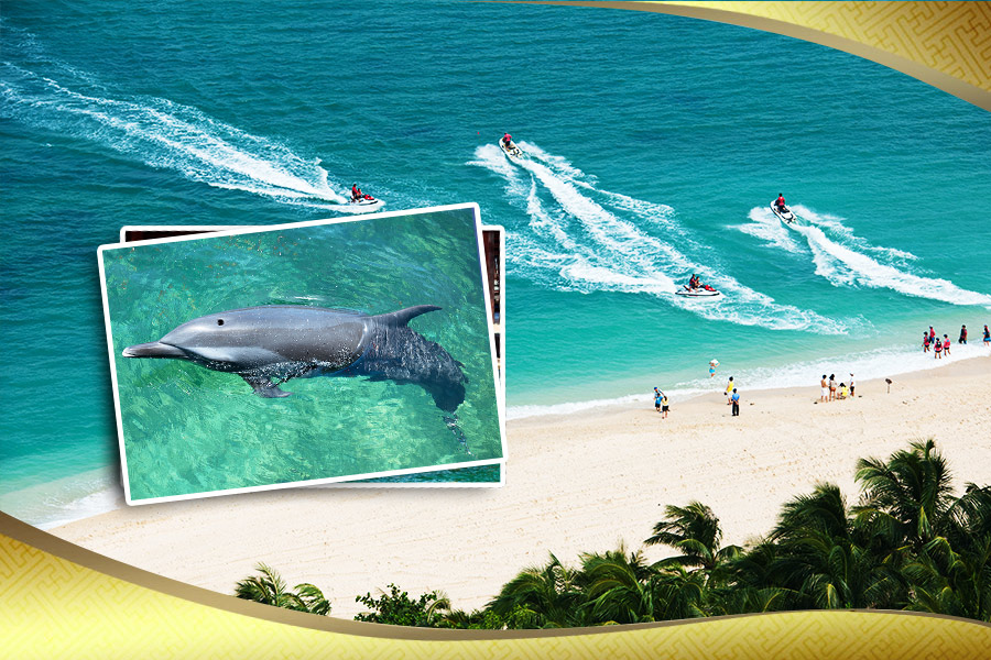 三亚分界洲岛、海豚表演巴士1日游(纯玩、含中