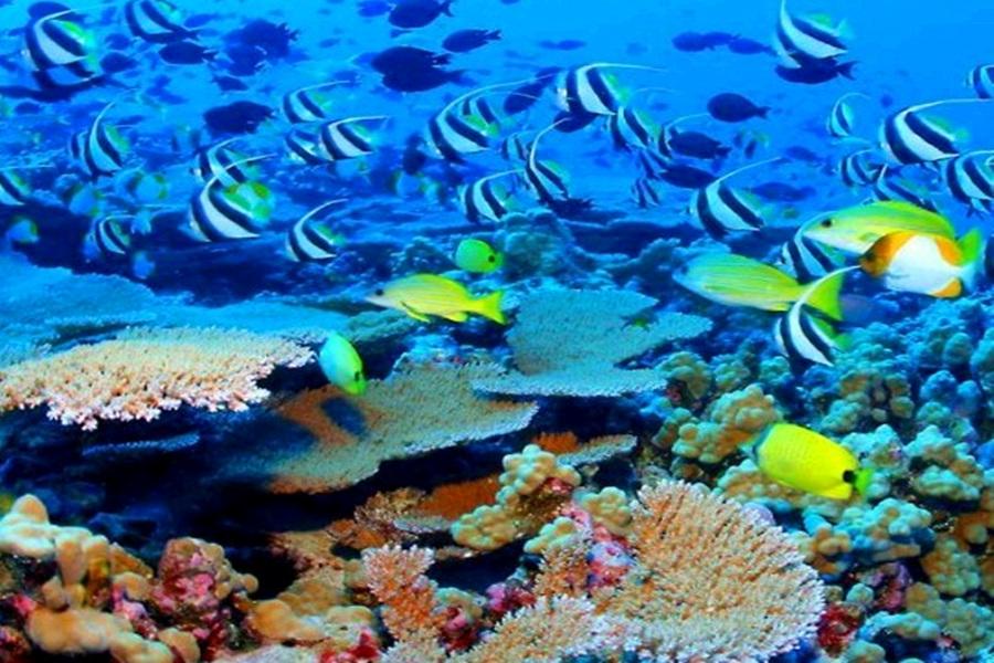 近距离观赏到品种繁多的海洋生物的优美身姿,还可以欣赏到群鱼喂食图片
