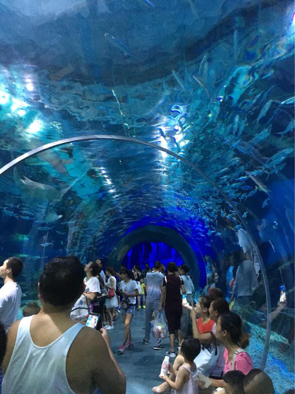 武汉市海洋公园_武汉极地海洋世界地址-武汉极地海洋世界地址