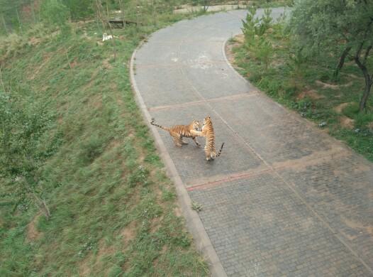 西宁野生动物园 青藏高原野生动物园图片