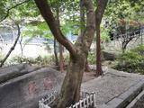 【7-8月暑期放价】庐山、三叠泉瀑布巴士2日游