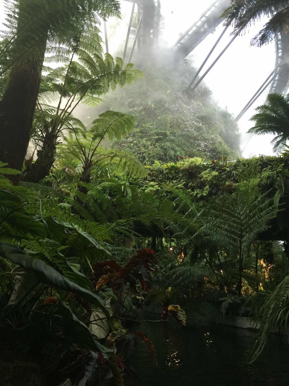 滨海湾花园 花穹和云雾林