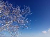 哈尔滨、亚布力、雪乡、长白山、雾凇岛双飞6日跟团游(东北冰雪黄金环线、2晚度假酒店、10项专项赠送)