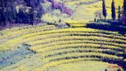 元阳梯田、罗平油菜花、东川红土地、普者黑、抚仙湖9日游([滇东南秘境之旅]云南摄影,真正纯玩户外摄影;观抚仙湖红嘴鸥;梯田已灌水,油菜花已开;摄影深度纯玩 铁定发团;特卖)