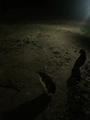 澳大利亚、凯恩斯、墨尔本9晚11日全景游(纯玩随心订,悉尼歌剧院,史蒂芬港海豚探寻,大堡礁★★★★)