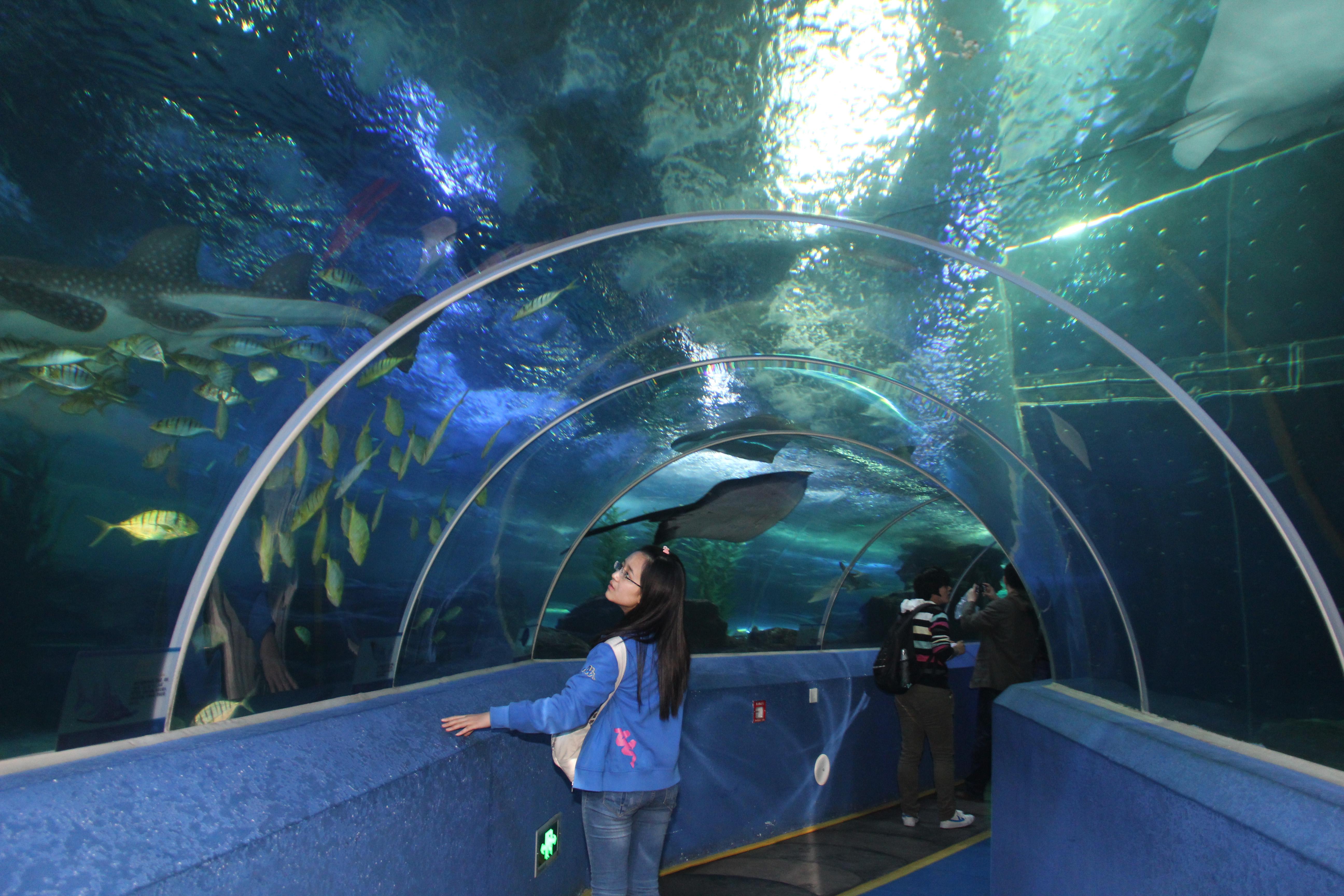 青岛的海底世界_青岛海底世界图片大全 青岛海底世界门票是多少