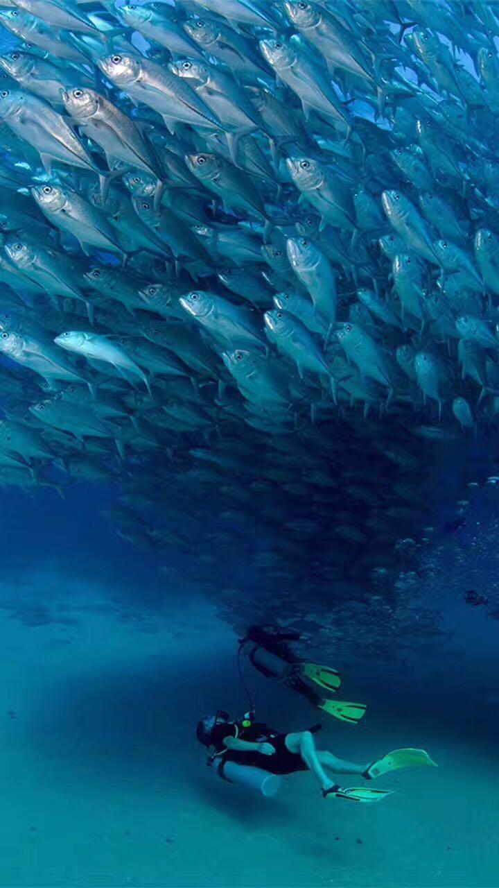 泰国潜水考证之旅