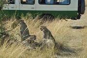 【驴悦亲子】肯尼亚9晚12日深度游([下单立减700每人]走进大自然与动物近距离接触,动物大迁徙,内罗毕长颈鹿公园,3晚马赛马拉,四大公园,两大湖泊★★★★★)