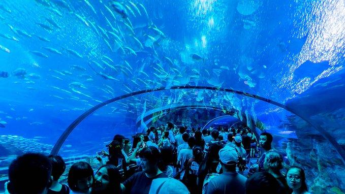 和无聊抗争到底,珠海长隆海洋公园
