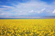 西宁、青海湖、茶卡、金银滩6日双卧跟团游(骑行加徒步、丰富的体验、美丽的风景、秋季特卖)