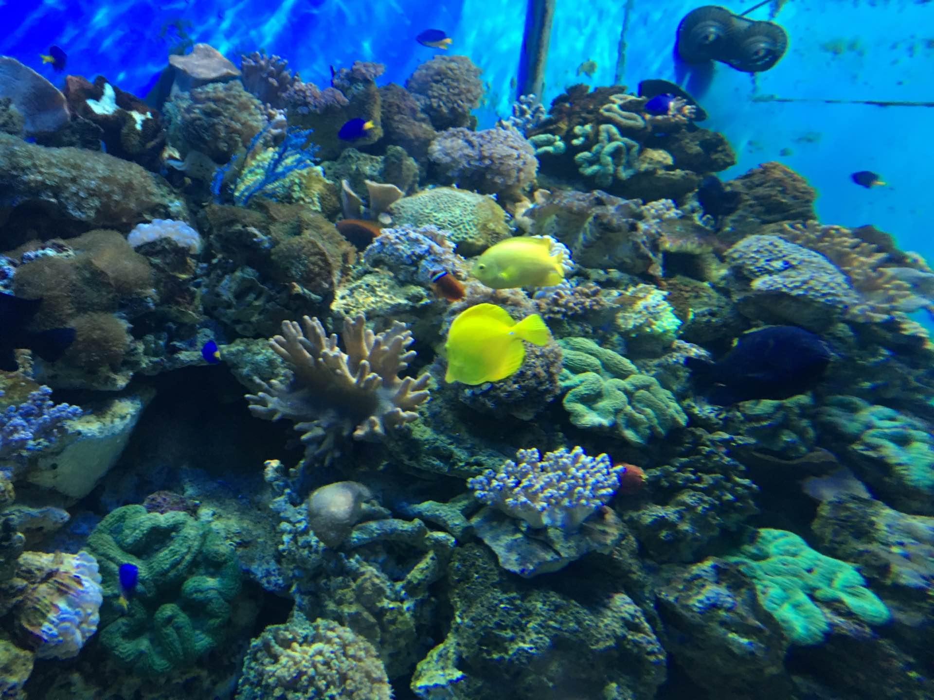 北京富国海底世界 + 成人票(含俄罗斯美人鱼和海狮表演)图片
