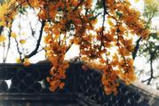 【浅深红树见扬州】住1晚扬州珍珠花房里酒店+瘦西湖风景区/瘦西湖温泉/大明寺/个园/何园(5选1)+品双人自助早餐+免费游东关街、宋夹城