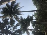 昆明抚仙湖、西双版纳穿越热带雨林6日3飞游(昆明直飞西双版纳;万达文华;植物园昆虫派对;入住雨林氧吧-王莲度假酒店;法式帆船游艇、野外雨林竹筒大餐,特卖)