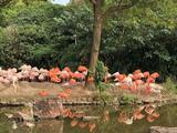 上海 2天1晚【海底小纵队主题房热卖中】 【与动物的亲密之旅】住1晚柏思特酒店(上海国际旅游度假区浦东机场店)(原上海柏思特酒店)+游上海野生动物园