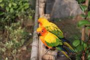 上海 2天1晚 【与野生动物来次亲密接触】住1晚上海花美时酒店+游上海野生动物园,和动物来一个大接触!